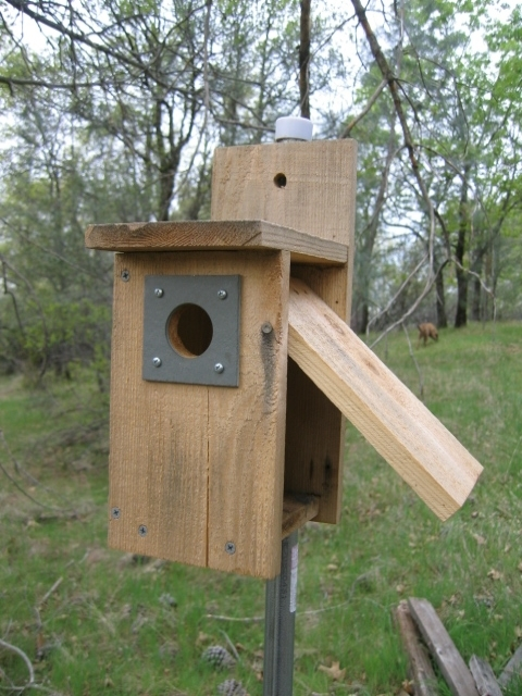 Audubon birdhouse plans for Different types of birdhouses