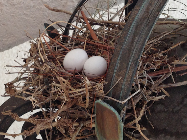 Mourning Dove Nest & Eggs on Light Fixture