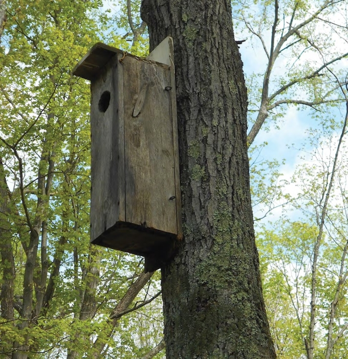 Northern Flicker Nest Box