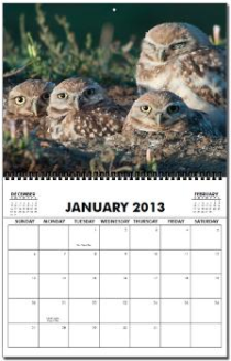 2011 Burrowing Owl Calendar