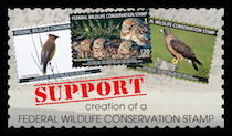 Wildlife Conservaation Stamp