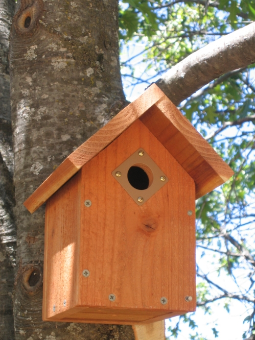 Cardinal bird house design home design and style for Bird house styles