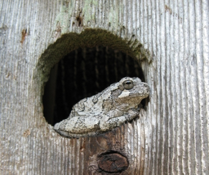Frog In A Birdhouse