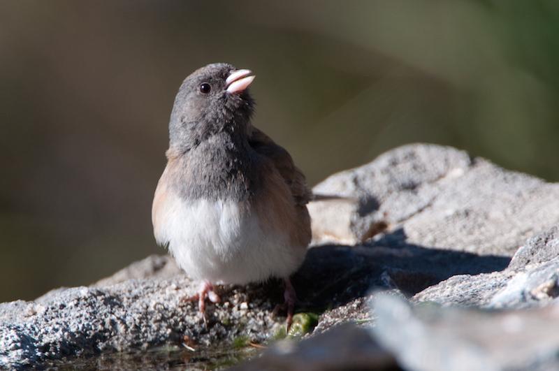 report bird sightings